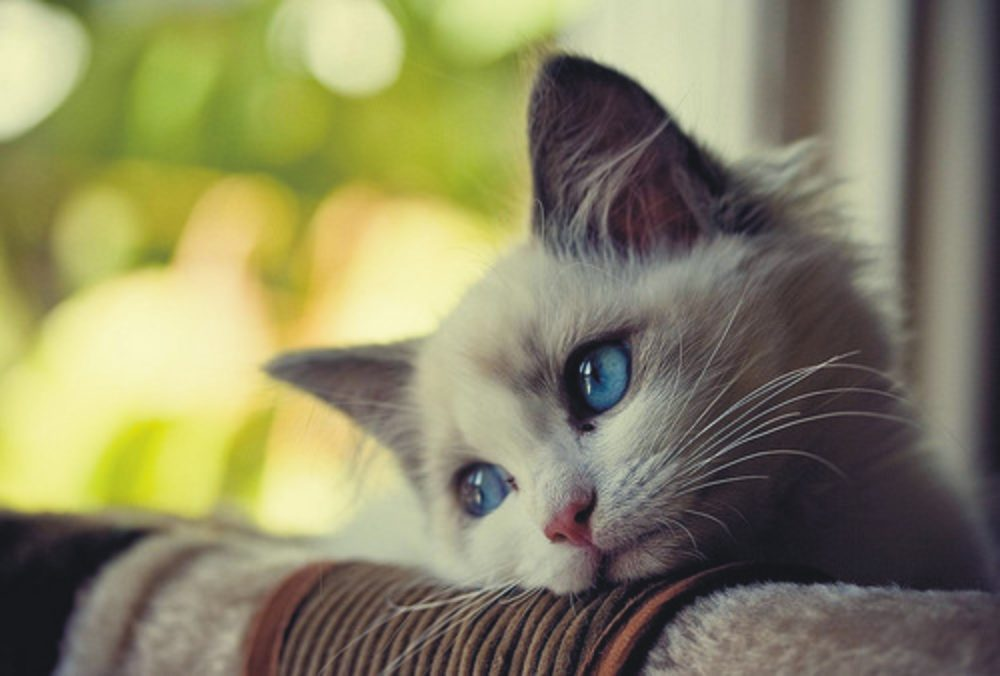Dataflow service is making this kitty sad too